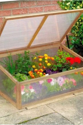 Features of the choice of greenhouses to give