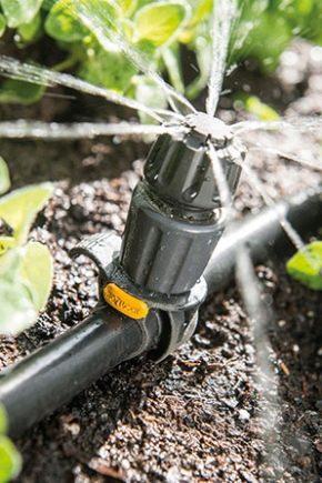 Autowatering i växthuset: funktioner och typer
