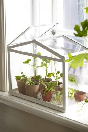 How to make a mini-greenhouse on the windowsill?