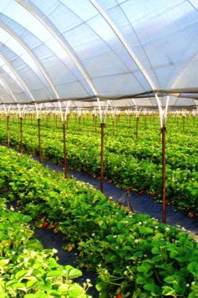 Memilih pemanasan untuk rumah hijau musim sejuk polikarbonat