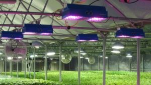 Lamps for greenhouses: selection criteria