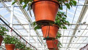 Arrangement of greenhouses inside: planning tricks