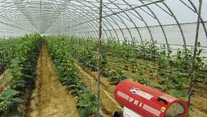 Greenhouse heating: options and features