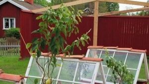 Glass greenhouses: what are and how to make yourself?