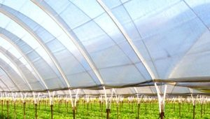 Choosing heating for a polycarbonate winter greenhouse