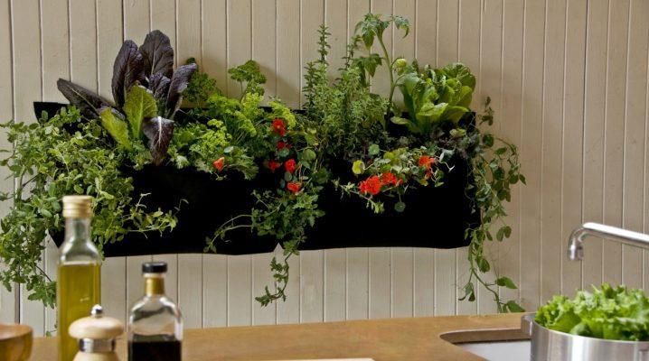 Φυτά για την κουζίνα