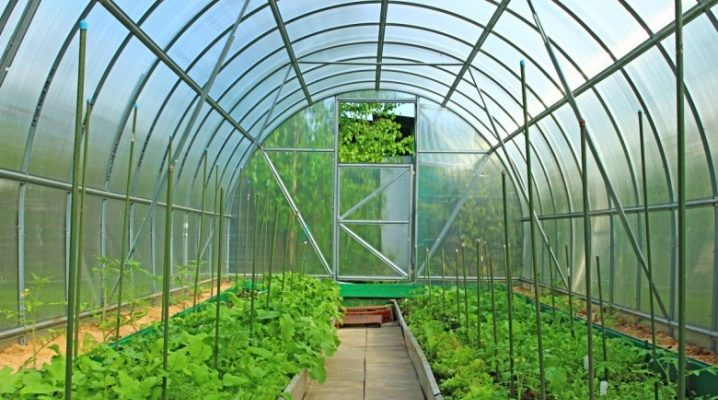 How to choose the optimal size of the greenhouse?