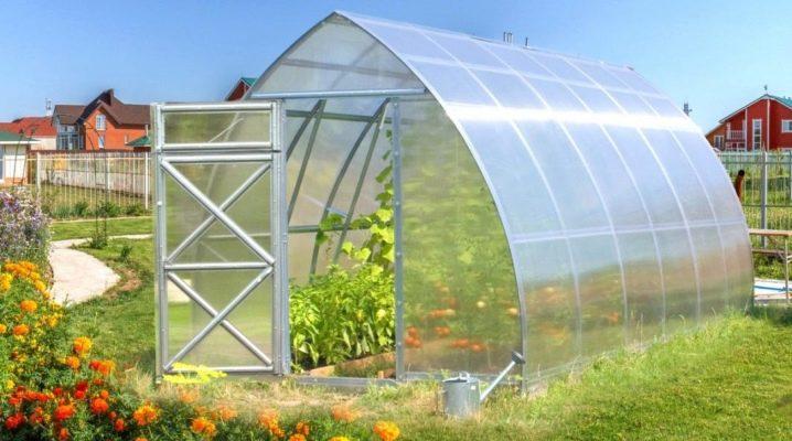 Greenhouse Will: jenis dan ciri-ciri