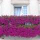 Blumen für den Balkon