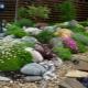 Tumbuhan Alpine: nama dan garis panduan penjagaan