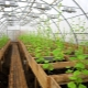 How to ensure year-round operation of the greenhouse: options for insulation