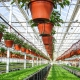 Arrangement of greenhouses inside: planning tricks