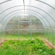 Greenhouses Agrosphere: types and rules of operation
