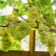 Greenhouses for grapes: design features