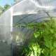 Greenhouse for cucumbers: types and details of production