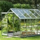 Greenhouses house: options and design features