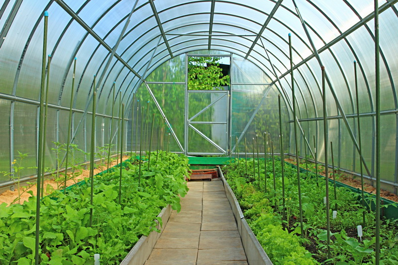 Polycarbonate greenhouse dimensions: standard sizes 2x3 and
