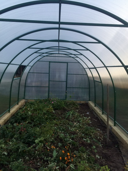Polycarbonate greenhouse dimensions: standard sizes 2x3 and 3x4 and